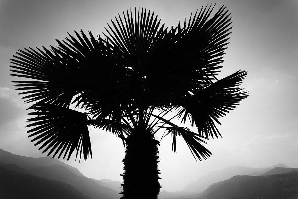 Abziehbild einer Palme