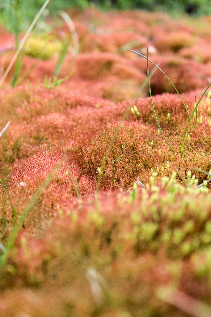 ...where the grass is red